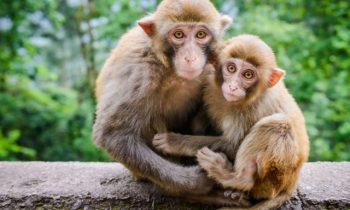 Tả con khỉ em có dịp quan sát hay nhất