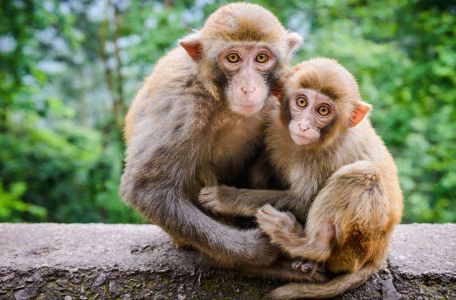 ta con khi em co dip quan sat hay nhat - Tả con khỉ em có dịp quan sát hay nhất